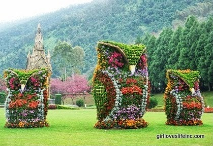 Flower Owls - Nantou County, Taiwan