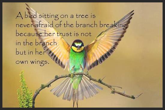 bird-quote-trust-girl-loves-life.JPG