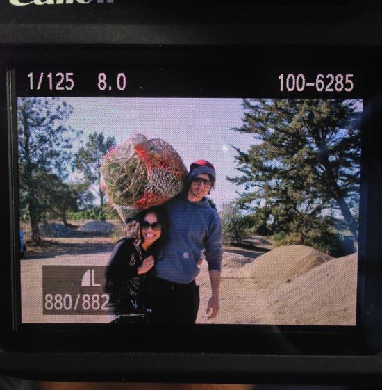 church's christmas tree farm, cutting your own christmas tree, christmas tree farm northern california