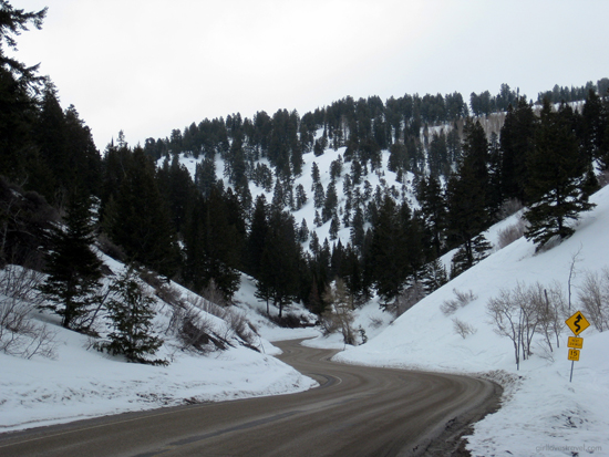 roads in powder mountain, renting a car in utah powder mountain, powder mountain utah snow, snow sports in utah, top travel bloggers los angeles, adventure bloggers los angeles, US california travel blogger, best travel blogs los angeles, black travel blogger, fun pictures of snow sports, best snowboarding california, best travel bloggers utah, beautiful snow pictures, pine trees in the snow, girl loves travel