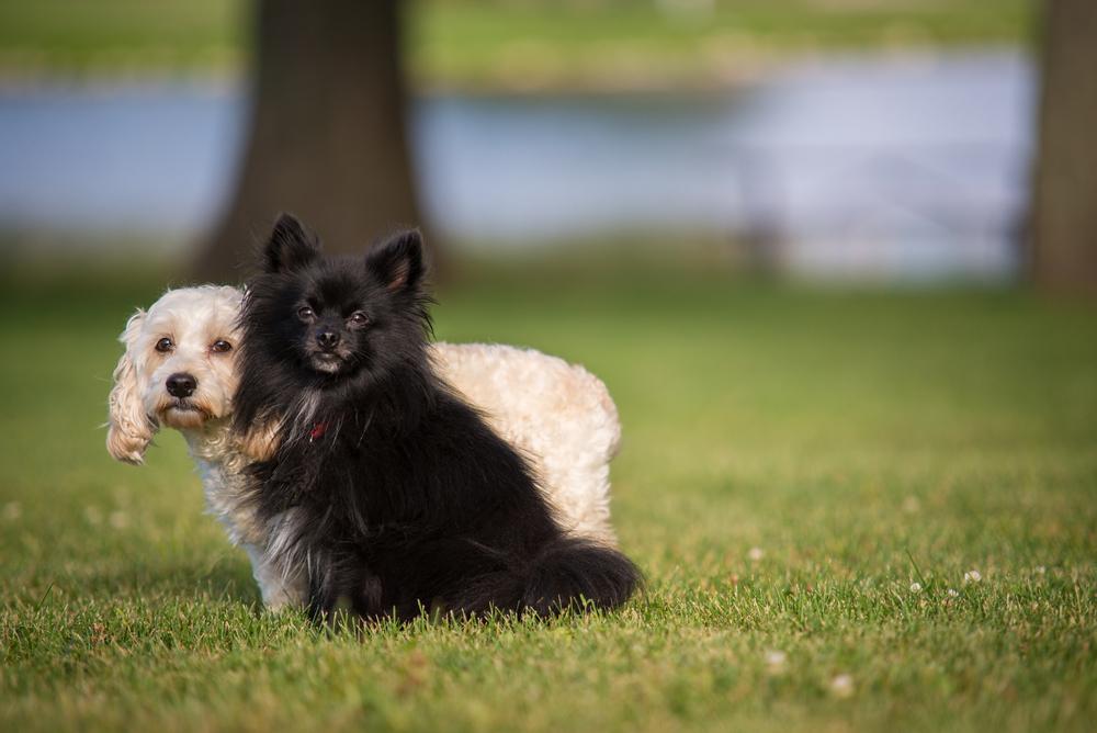 Blackie&Emma-1.jpg