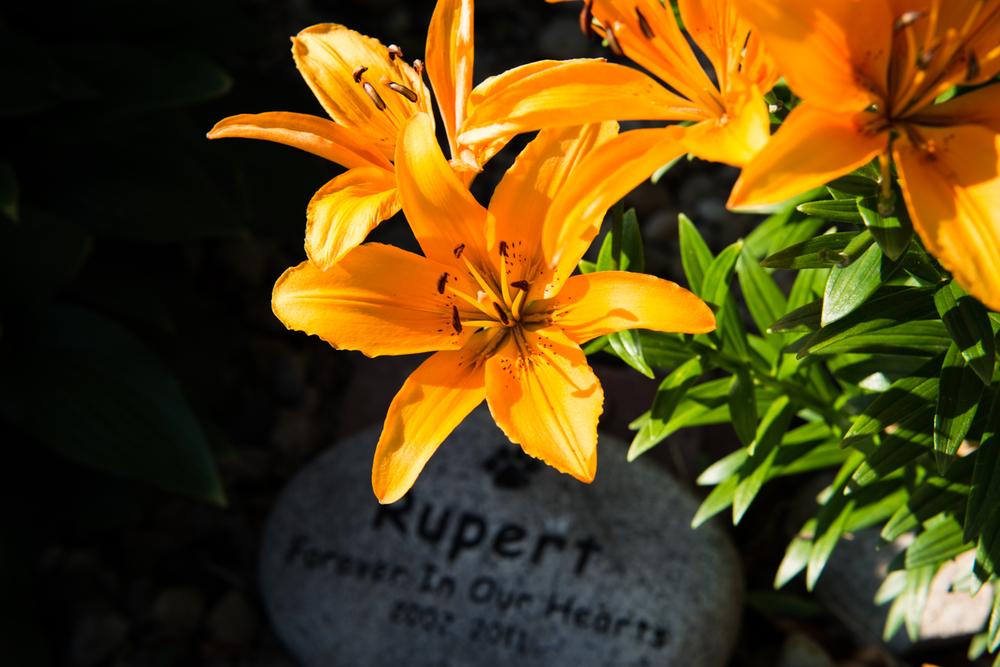 rupert stone-1.jpg