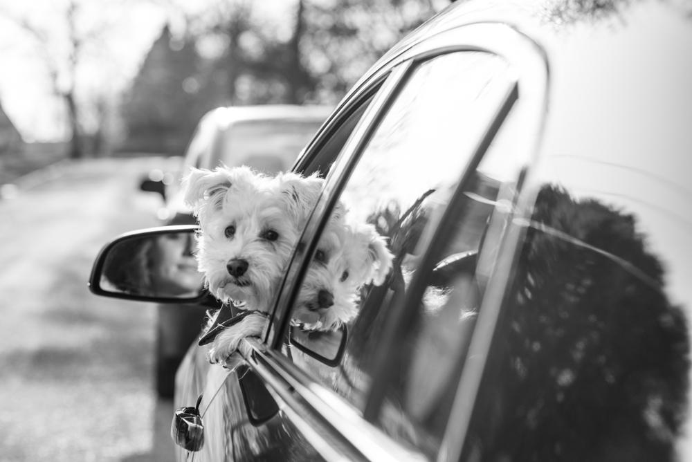 dog-girl-car