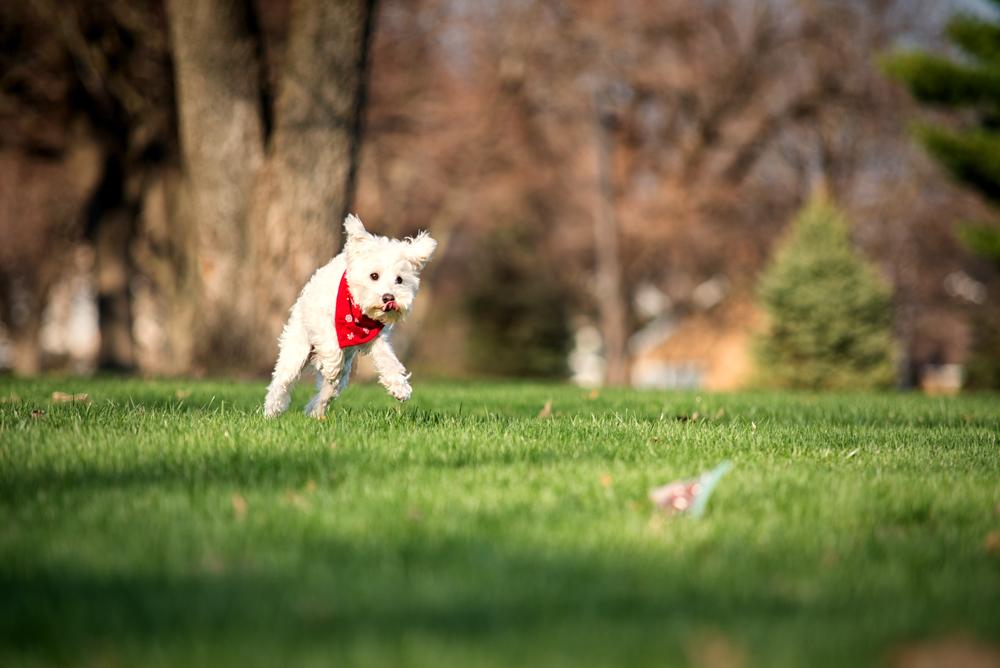dog-chase-treats