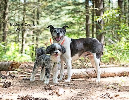 dogs-terrier-woods