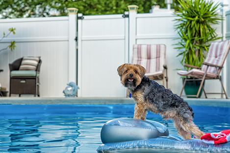 dog-pool-terrier-water