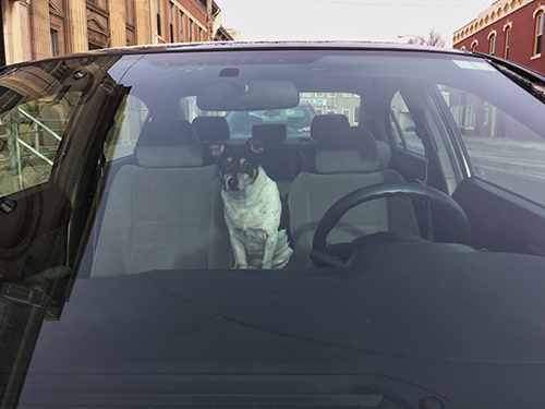 terrier-car-sit
