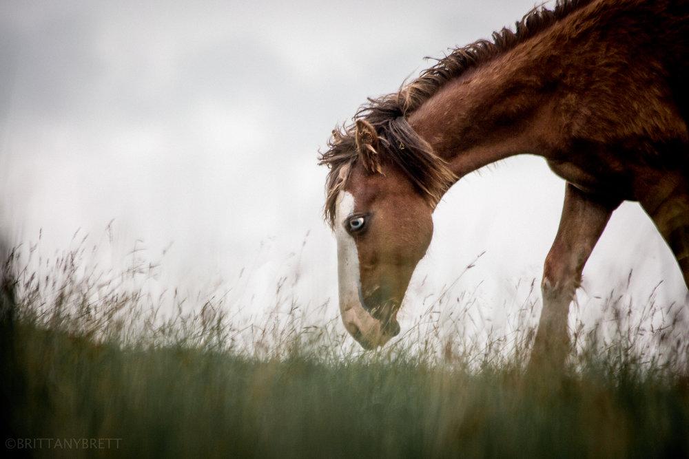 wild horses-5.jpg