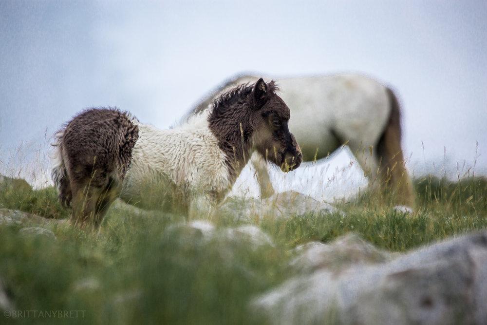 wild horses-3.jpg