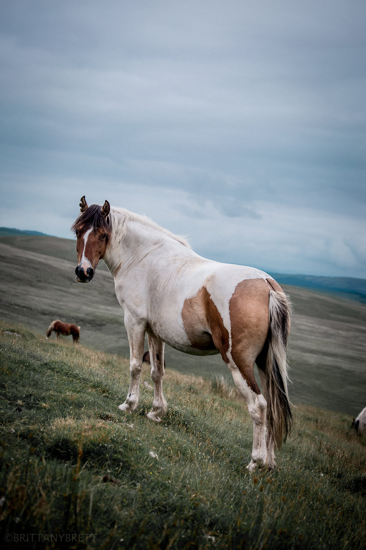 wild horses-8.jpg