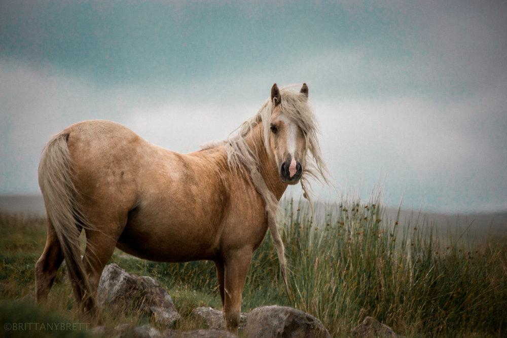 wild horses-1.jpg