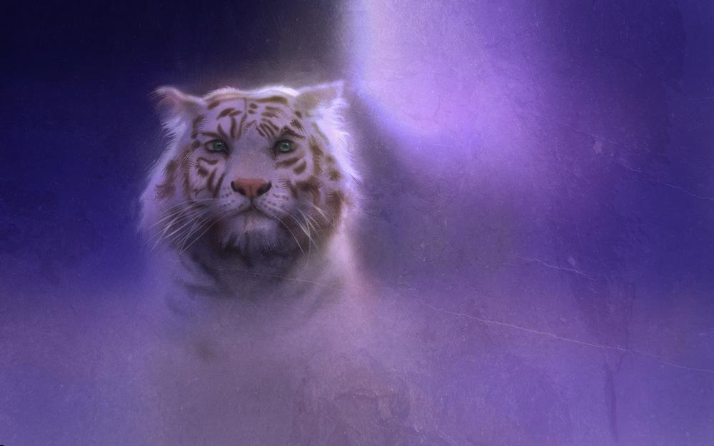 tiger2wallpaper.jpg