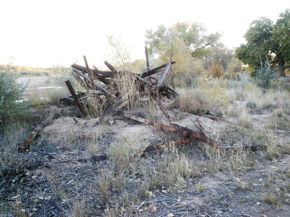 Original Site Condition, Fall 2008 Rio Grande Bosque, Albuquerque New Mexico