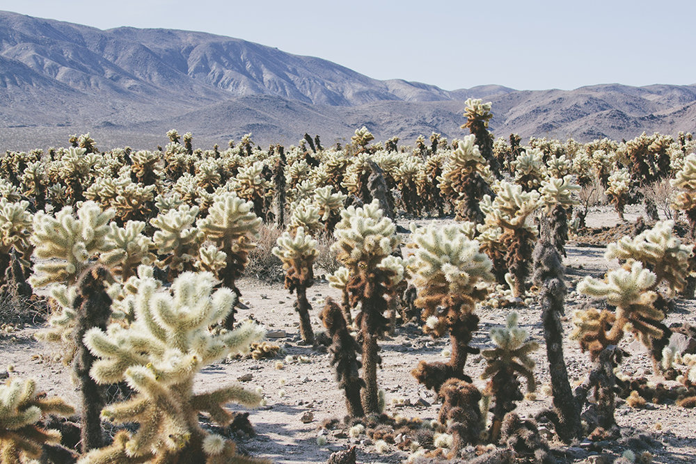 Print Club Ltd. visits Joshua Tree National Park