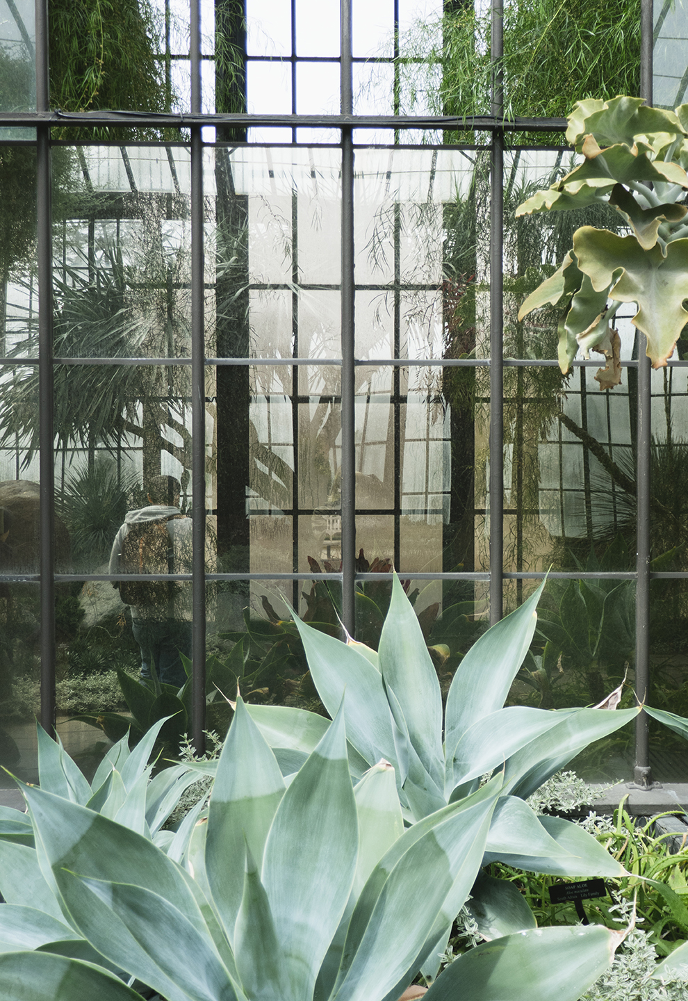 Longwood Gardens Conservatory on the Print Club Ltd. Journal
