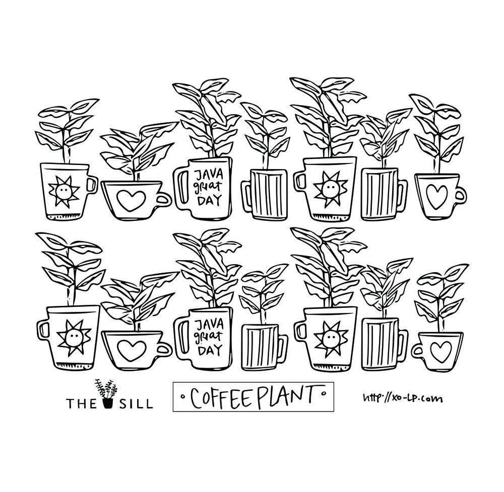 TheSill Coffee Plant.jpg