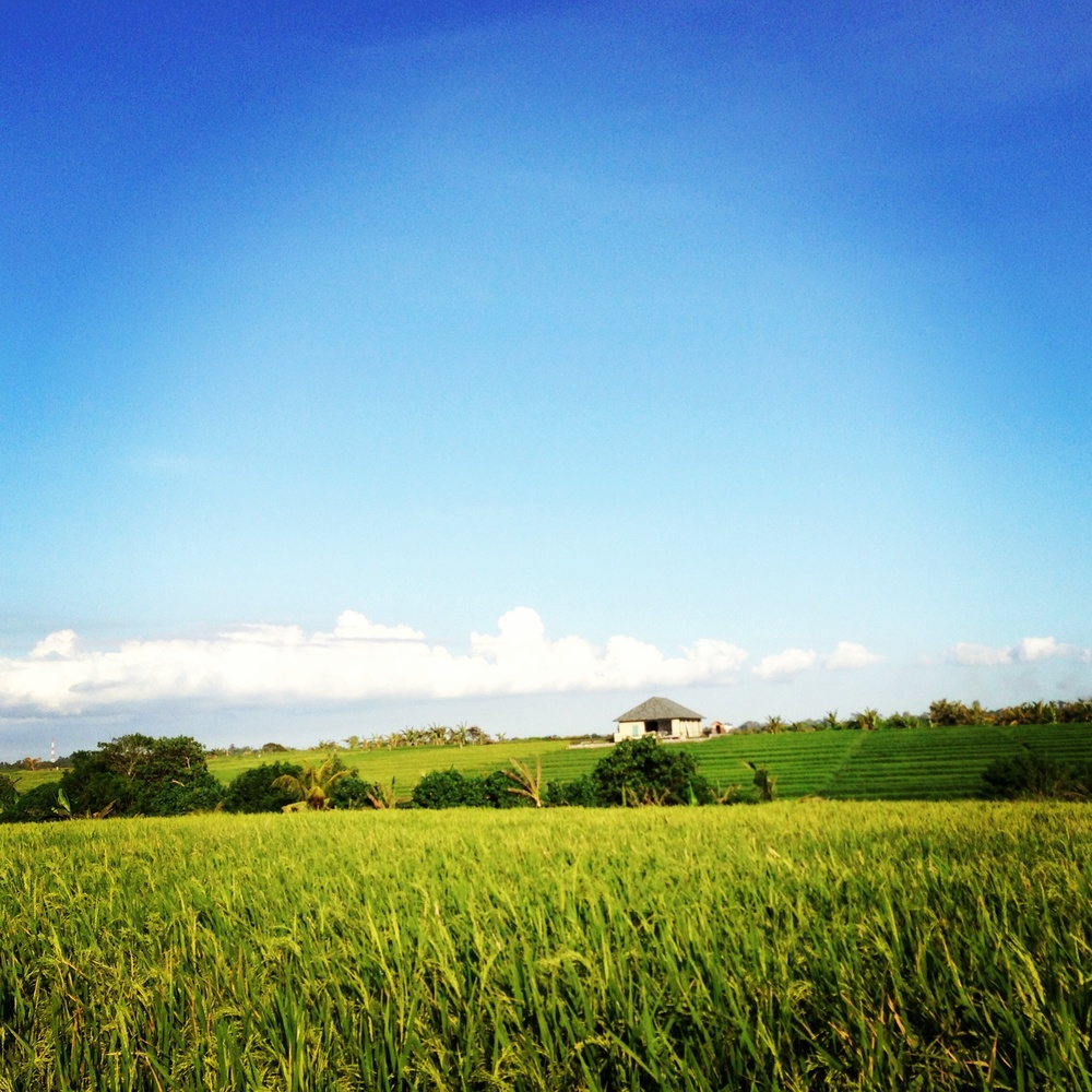 A view from our family's villa-to-be. Now it's a paddy field