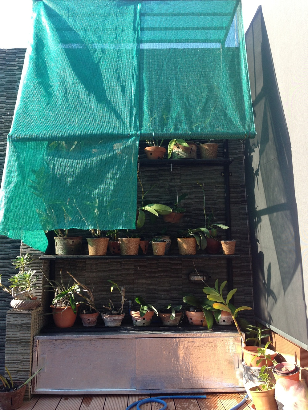 Dad's orchids finally have a new shelter :)