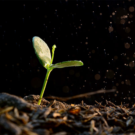 planting seed -planting seedling -seed planting -seedling planting -planting seeds -planting seedlings