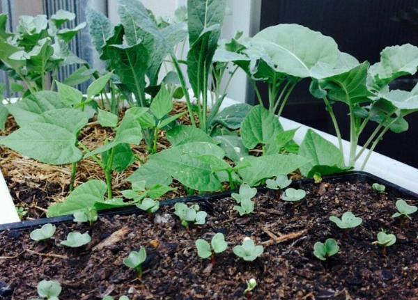 planter box soil -planting soil mix - planter box soil -planter soil -planters mix soil