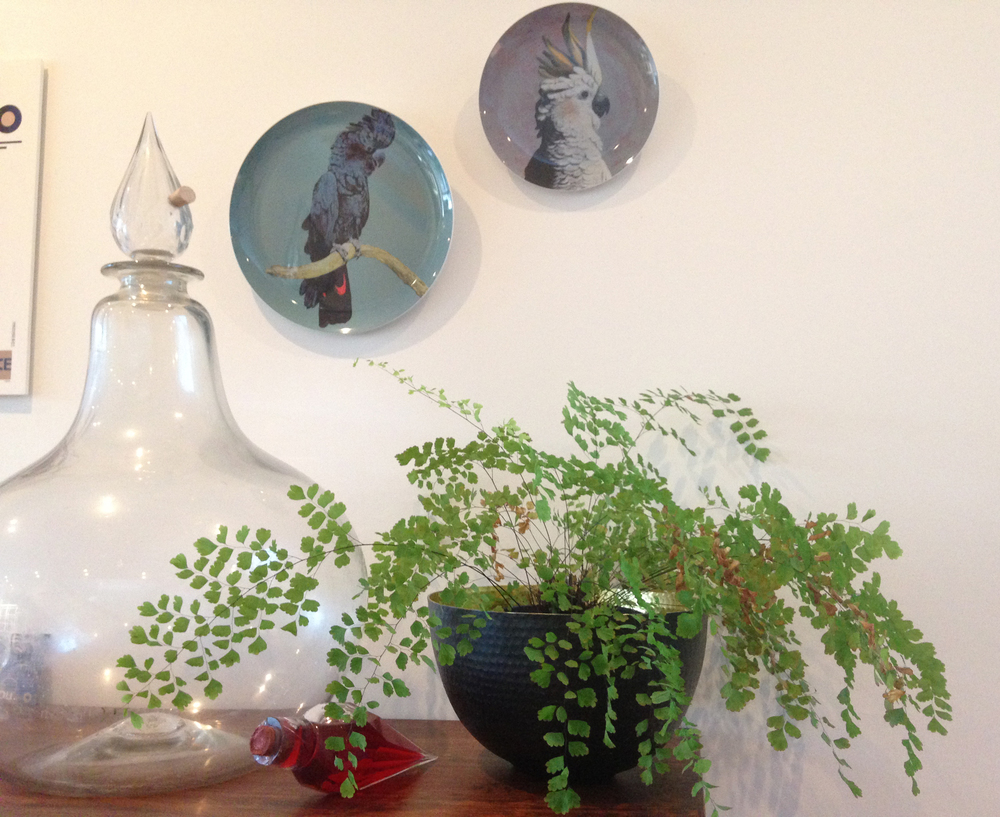 Maidenhair Fern - These delicate looking plants are perfect in low-light areas but need to be kept warm and moist