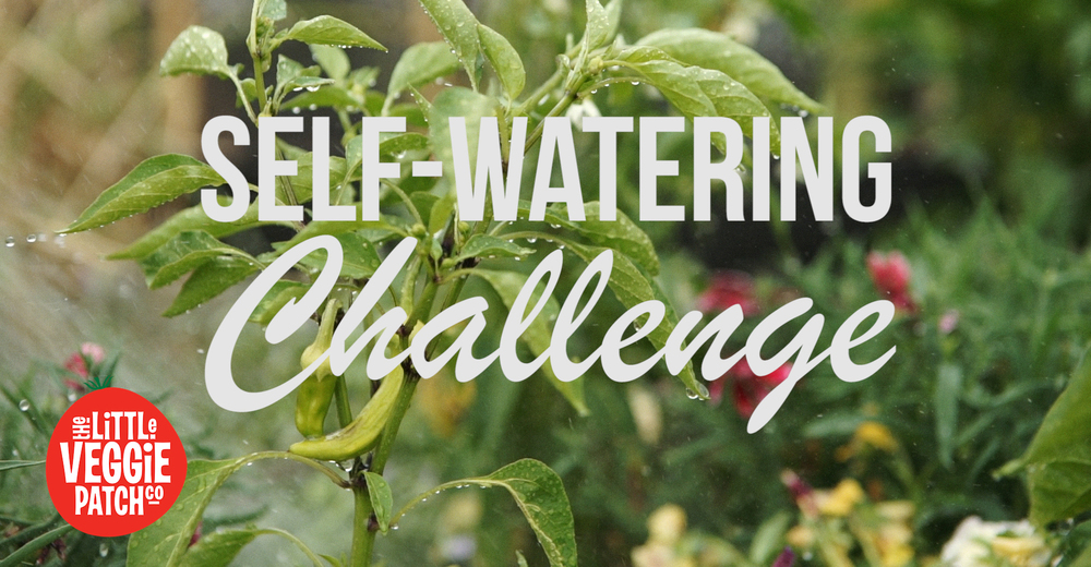 self watering title banner.jpg
