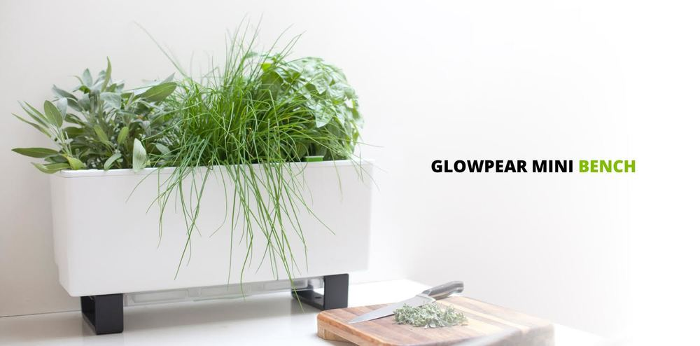 Awesome Self Watering Indoor Planters Part - 7: Introducing Glowpear SELF WATERING PLANTERS
