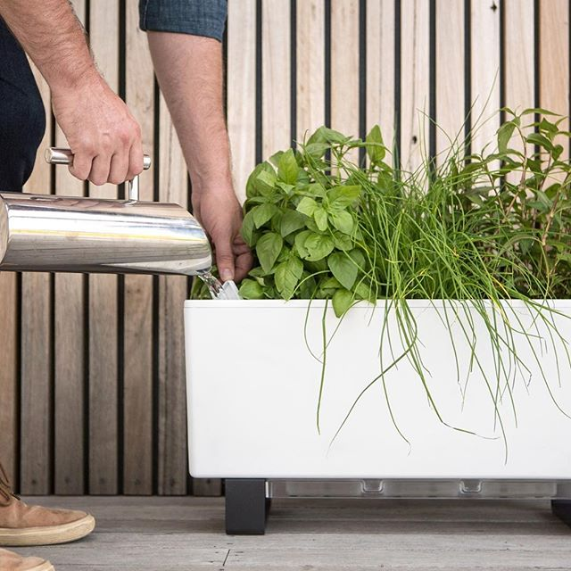 Can't stand bugs? Neither can we - which is why our Glowpear self-watering planters feature fill points with hinged covers and grills to stop insect infestation (great for areas prone to mozzies). . .  #selfwatering #selfwateringplanter #balconyplanter #glowpearplanter #summerplanting #whattoplant #greenwall #growvertically #verticalgarden #smallspacegardening #growyourown #locallygrownfood #ediblegardening #urbangardening #greenthumb #permaculture #goinggreen #foodisfree #homegrown #gardenersofinstagram #inmygarden #instafarm #plantstagram #gardenknowhow #gardenhelp #gardenadvice #produce #summer #kitchengarden #homegrown