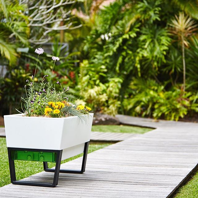 Our self-watering planters are great for growing your own herbs and veggies - but they're also the perfect home for your decorative flowers and plants. . . .  #selfwatering #selfwateringplanter #balconyplanter #glowpearplanter #summerplanting #whattoplant #greenwall #growvertically #verticalgarden #smallspacegardening #growyourown #locallygrownfood #ediblegardening #urbangardening #greenthumb #permaculture #goinggreen #foodisfree #homegrown #gardenersofinstagram #inmygarden #instafarm #plantstagram #gardenknowhow #gardenhelp #gardenadvice #produce #summer #kitchengarden #homegrown