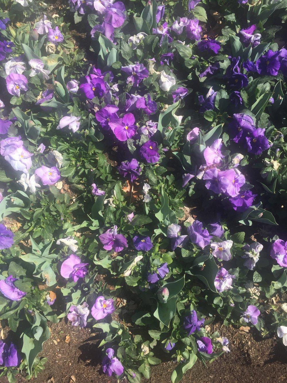 Spring flowers @ Floriade
