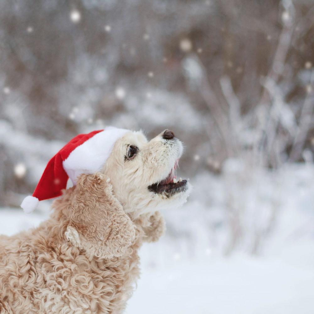 Joululauluja laulamassa