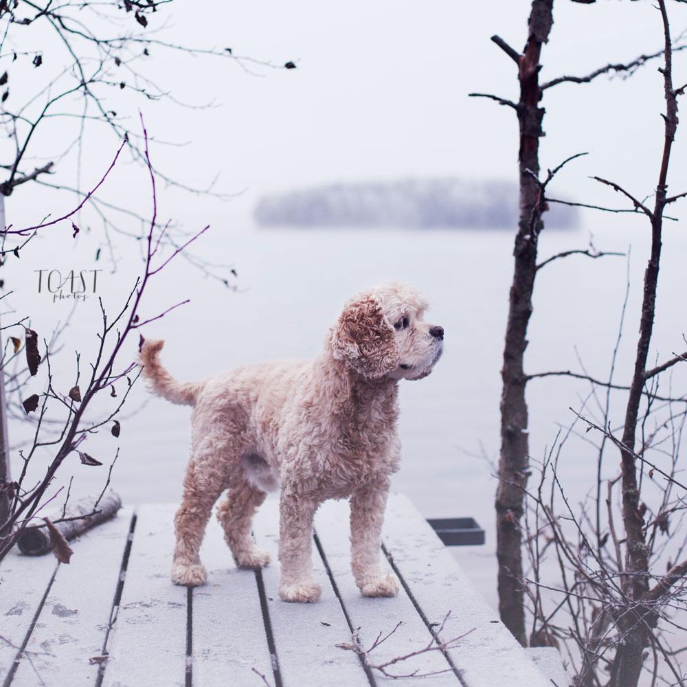 Syystalven ensimmäinen hento lumi on kaunis valokuvissa.