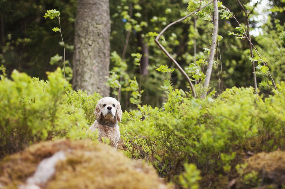 Itä-Helsingin metsät ovat upeita kuvauspaikkoja lemmikkikuvauksille.