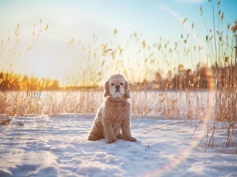 Talvinen auringonlasku ja hiukan kärsimätön ilme.