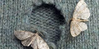 Moth Removal