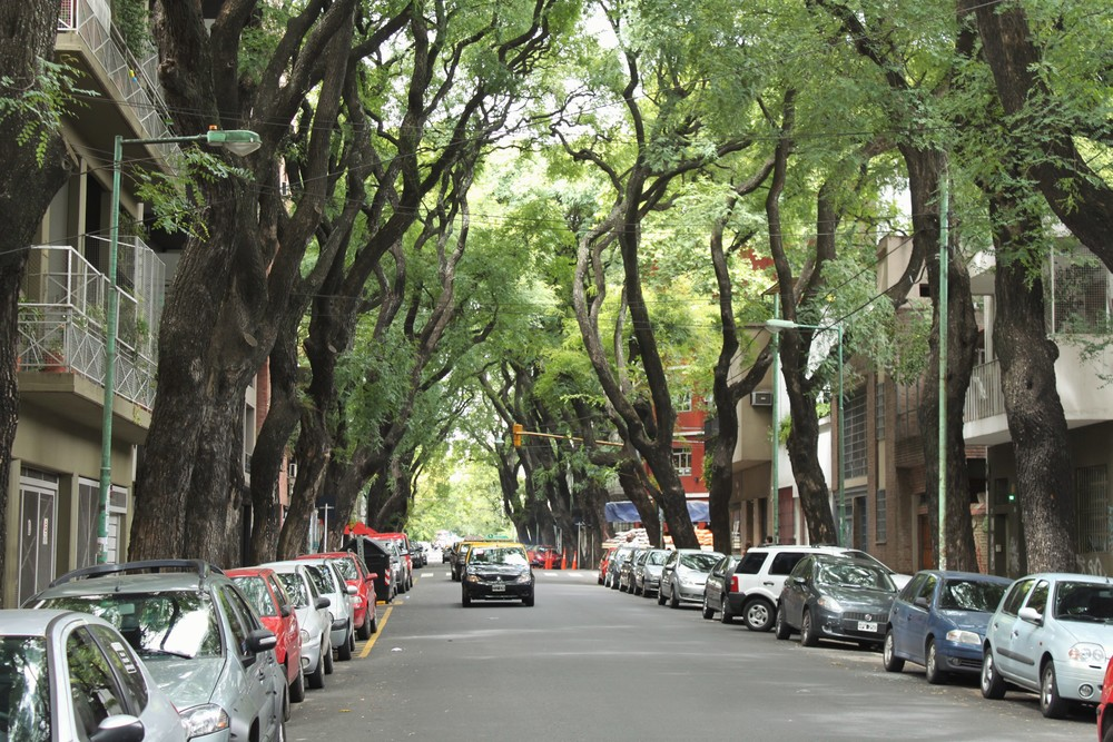 The enchanting tree-lined streets around our apartment