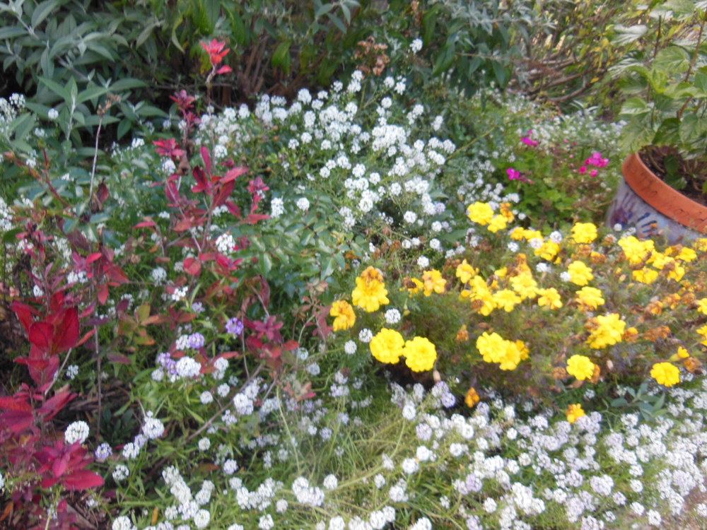 gardenfading1021133DSCN3623.JPG