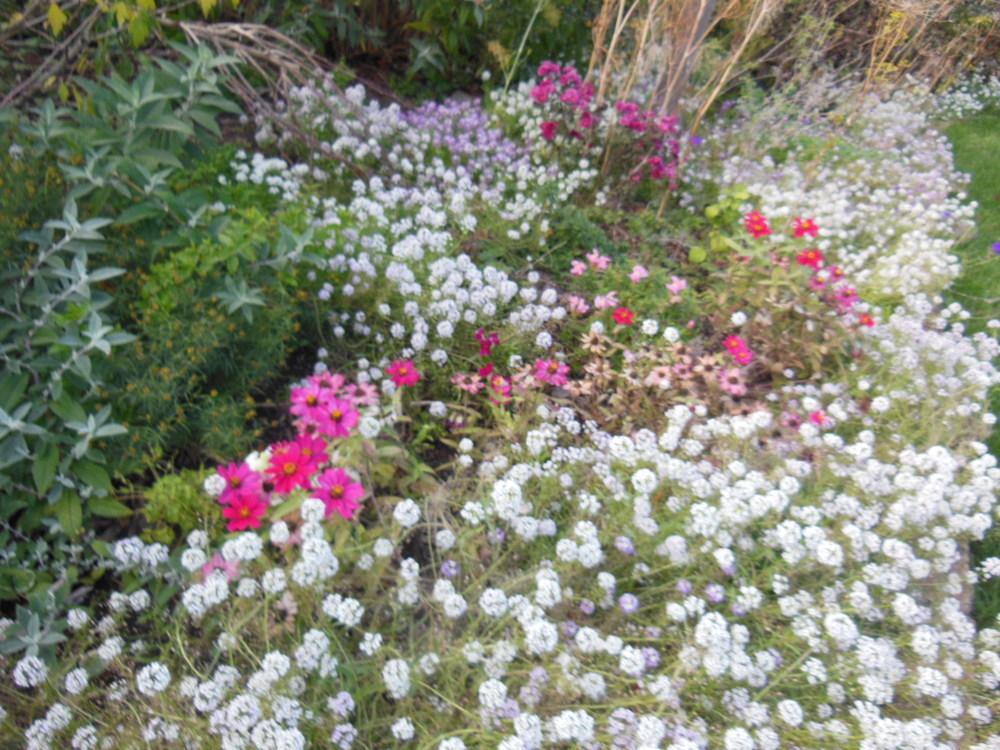 gardenfading102113DSCN3620.JPG