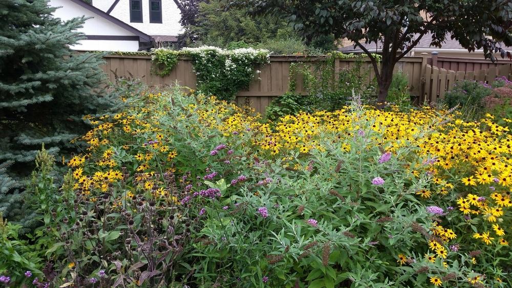 Backyard, September 15, 2014