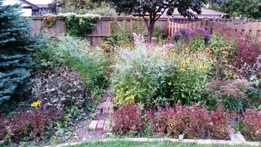 Backyard, October 1, 2014