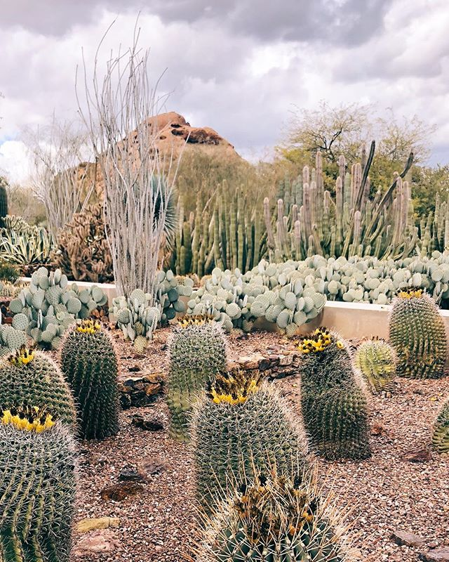 I always love our annual trips to Arizona to visit our snowbird family. There's something about the desert that brings me instant tranquility.  #pheonix #arizona #desert #cactus