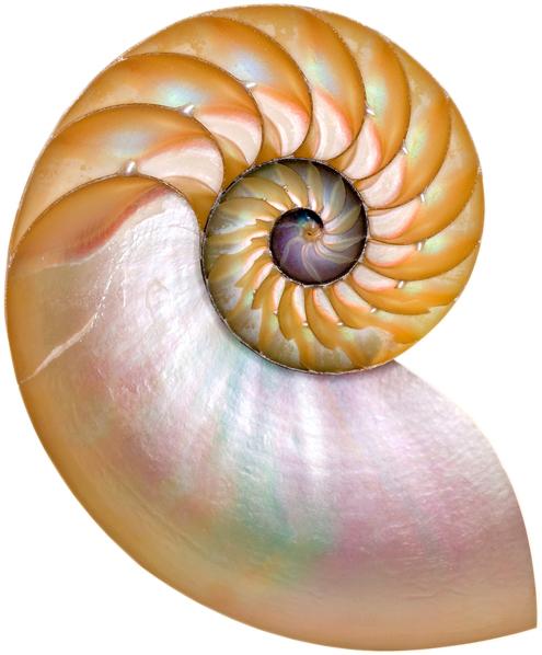 nautilus fr Betsy photo.JPG