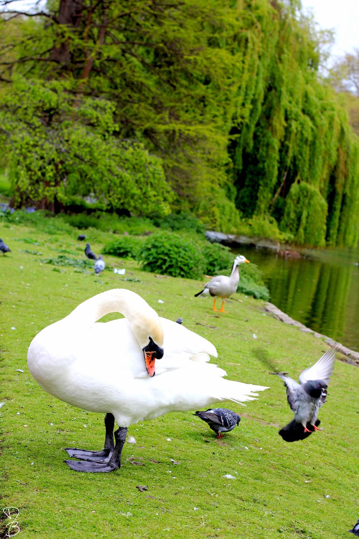 london duck.jpg