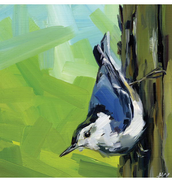 Alyssa Watters - white breasted nuthatch 2014.jpg