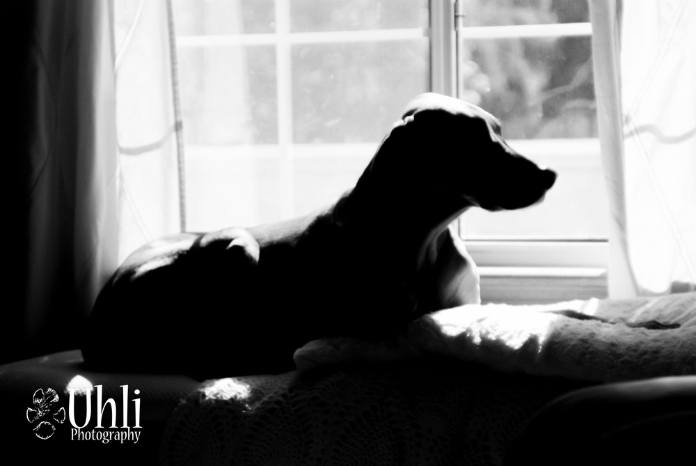 6.1.13 - Killian by the window, his favorite place for soaking up the sun.