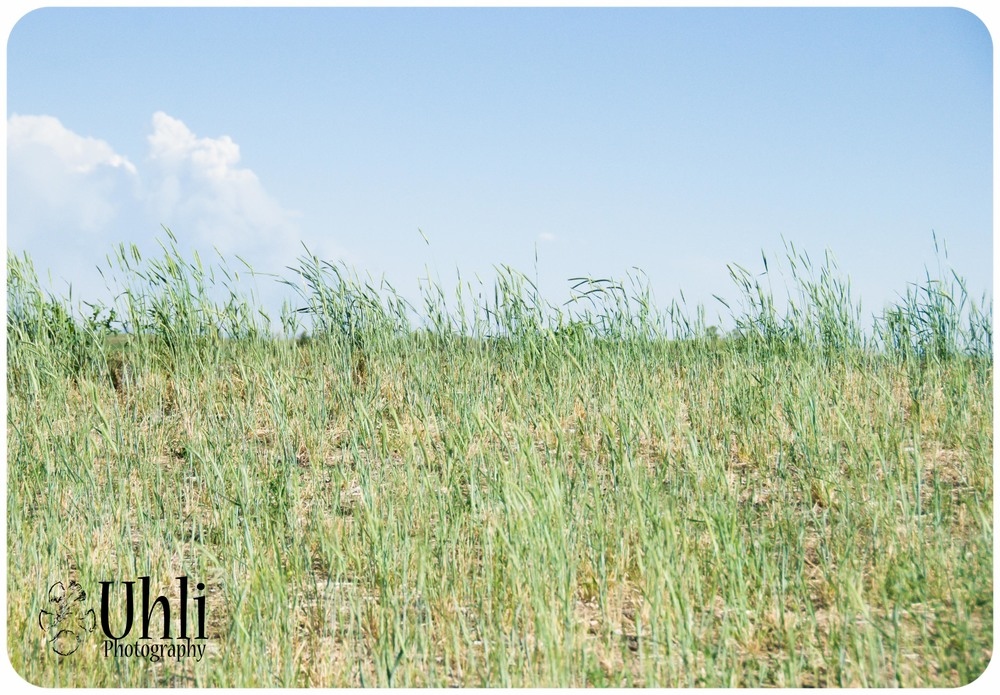 6.11.13 - Grass, Wind, Blue Sky - I love Colorado