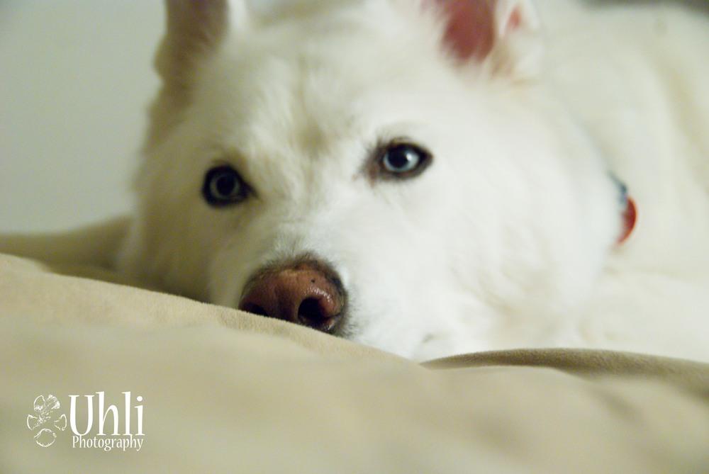 6.21.13 - Lazy Pup