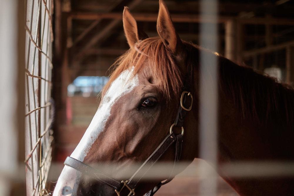 brannon_amber_brannon_oily_stable_horses_oils_branding_design.jpg