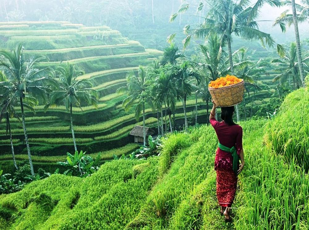 Bali Rice Fields.png