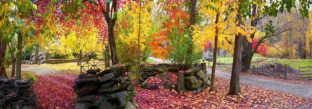 Autumn Symphony.jpg
